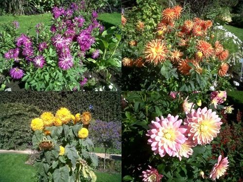 Flores_Jardin-des-Plantes