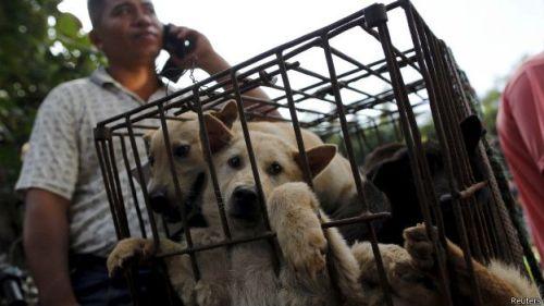 Cães vendidos em um mercado de Yulin na China