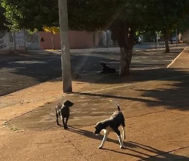 Cachorro matilha