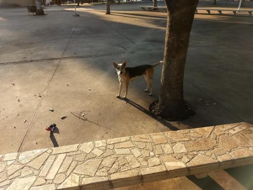 Cachorro solitario_orig